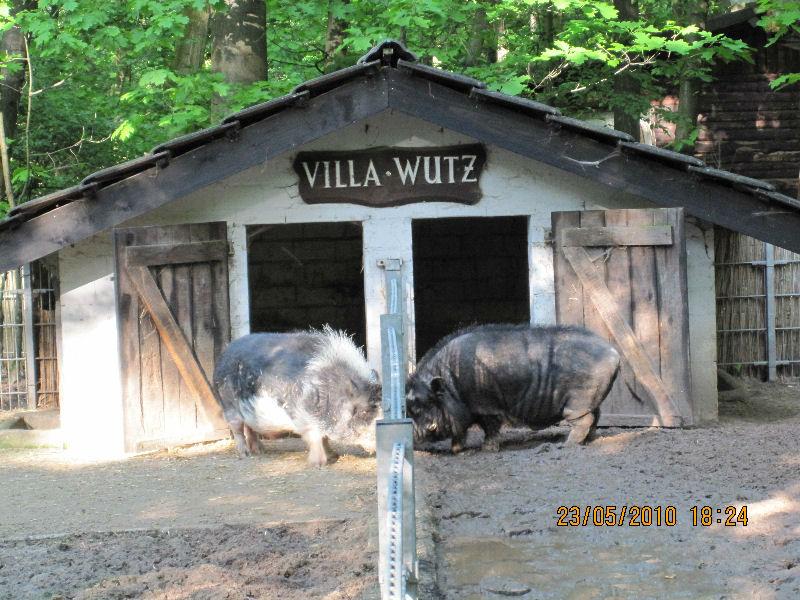 Villa Wutz im Kobelt-Zoo © Kobelt-Zoo